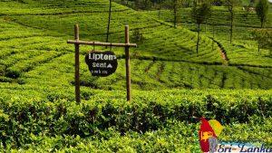 Lipton's seat - Thé