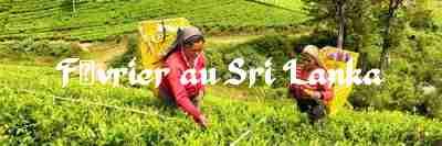 Février au Sri Lanka